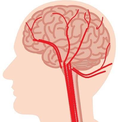 人間の頭部の血管・毛細血管