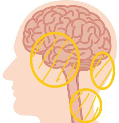 頭皮マッサージをするべき場所、太い血管から毛細血管へ